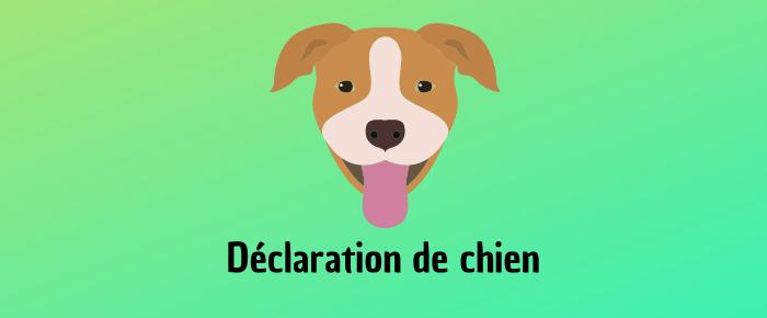 Déclaration de chien